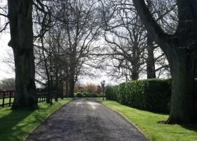 avenue-in-spring